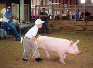 Tim shows his prize pig.
